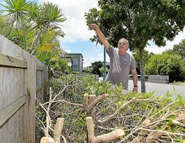 Residents outraged at no consultation for tree cut backs