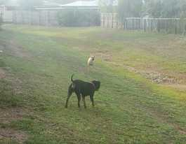 Rabbit killers on the loose in Gracemere