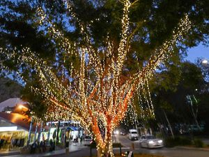 CHRISTMAS CHEER: Be in Hastings Street tonight for the annual lighting of the tree.