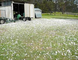 Hail relief granted for Coffs Coast farmers