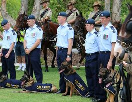 RSL recognises animals who've served Australia