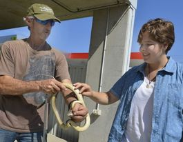Weather forcing deadly snakes on the move in Gladstone