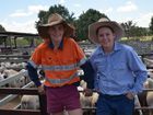 Budding station agents enjoy the saleyards