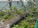 Some of the storm damage from the Southside and Silky Oak Drive wreaked in Monday's night's storm.