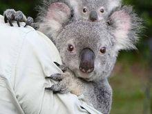 Go Wild at Australia Zoo with Kidsafe QLD