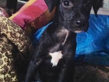 5 mth pup LULU is LOST in CASINO