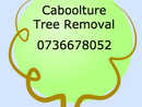 Caboolture Tree Removal has provided tree lopping, tree maintenance, stump removal and grinding and general tree services to the Caboolture and Northside Brisbane. We have become one of the trusted names in tree services in the Caboolture area. Our organisation is focus on the best quality, lowest and safest tree removal in Caboolture area. We have 100% family owned and operated and will continue to be in order to our commitment to customer service and serving the Caboolture community. <p></p><p>Visit Us at www.caboolturetreeremoval.com</p><p>Or call us 0736678052</p>