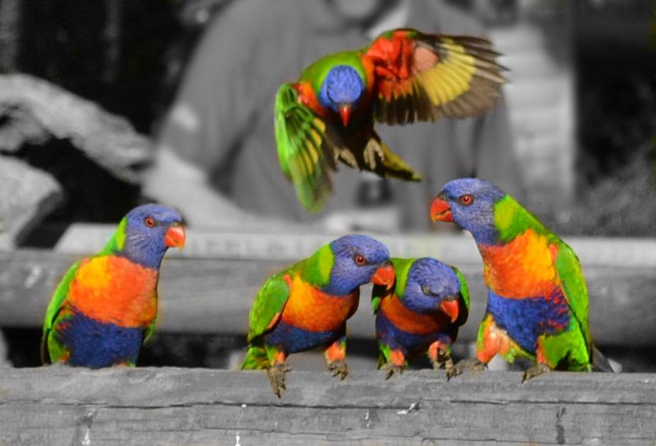 Bird feeding at Cania Gorge (Belinda Blackburn) - User Contributed