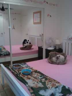 Home Away From Home. Cat boarding at its very best. Every cat has its own bedroom in my home.