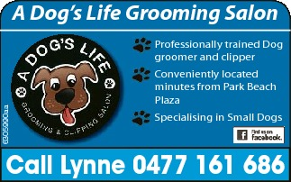 Professionally trained Dog groomer and clipper