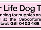 Fun For Life Dog Training