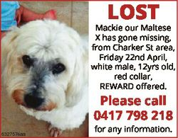 LOST Mackie our Maltese X has gone missing, from Charker St area, Friday 22nd April, white male, 12y...