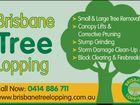 Brisbane Tree Lopping