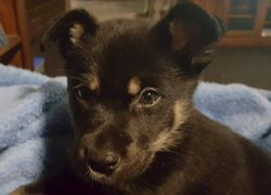 Young puppy found in Park Avenue area on Saturday 28/5/16.  Owner will need to be able to describe/i...