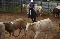Alstonville, close to town. Experienced horseperson. Phone Michele 0421774067