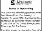 Livingstone Shire Council