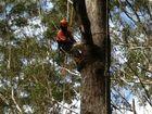 Arborist Apprenticeship
