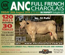 ANC FRIDAY 26th August 2016 at 12 noon ON PROPERTY Guluguba Qld 120 BULLS Inc. 52 Polls including 30...
