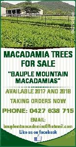 "6427941ab MACADAMIA TREES FOR SALE ""BAUPLE MOUNTAIN MACADAMIAS"" AVAILABLE 2017 AND 2018 TA..."