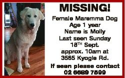 MISSING! Female Maremma Dog Age 1 year Name is Molly Last seen Sunday 18TH Sept. approx. 10am at 356...