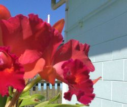 Reliable  gardening service. Seniors discount. Call Craig 0459348709