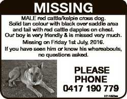 MISSING MALE red cattle/kelpie cross dog. Solid tan colour with black over saddle area and tail with...