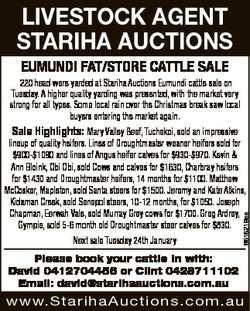 LIVESTOCK AGENT STARIHA AUCTIONS EUMUNDI FAT/STORE CATTLE SALE 220 head were yarded at Stariha Aucti...