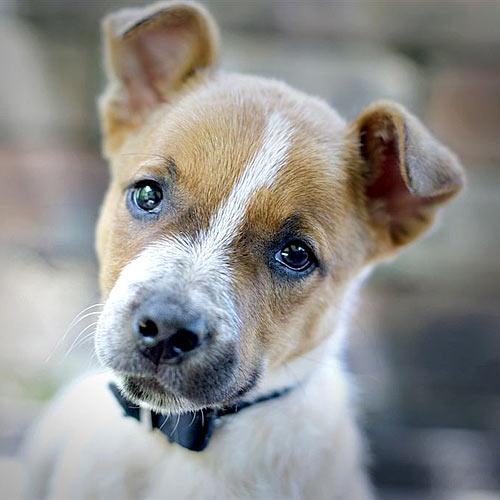Rare dog syndrome   Sunshine Coast Daily