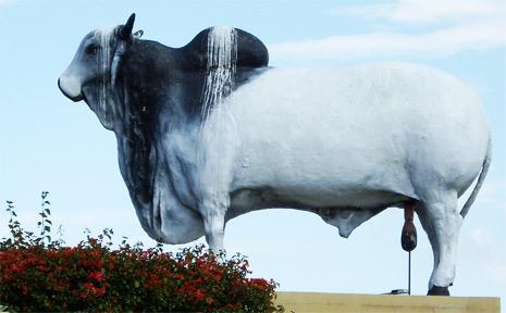 Beef Australia 2009 - Rockhampton | Observer