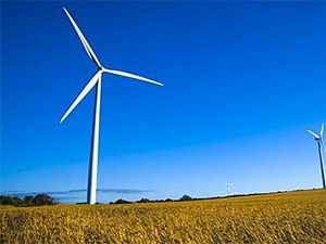 Impact of wind turbines on birds blown out of proportion