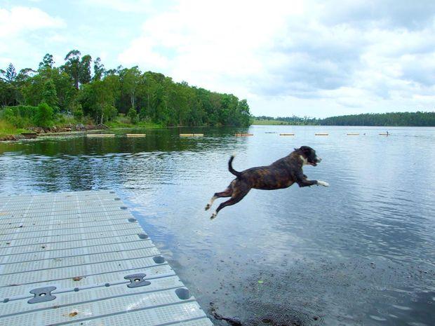 Dog Friendly Accommodation Sunshine Coast Hinterland