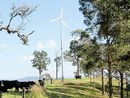 CROWS Nest residents opposed to a giant wind farm are today reeling after the company involved announced it had no intentions of turning its back on the project.