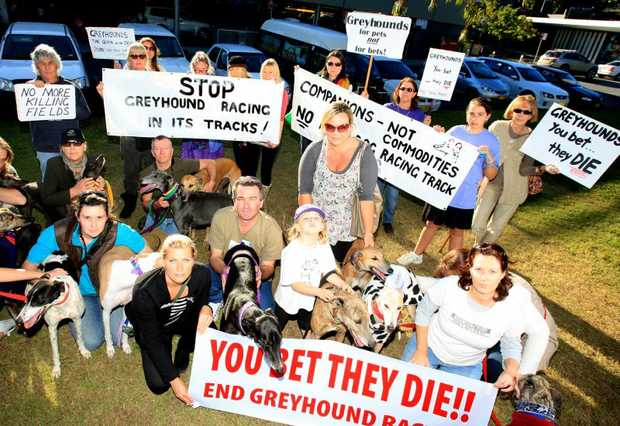 Protesters gather outside Tweed Shire Council.