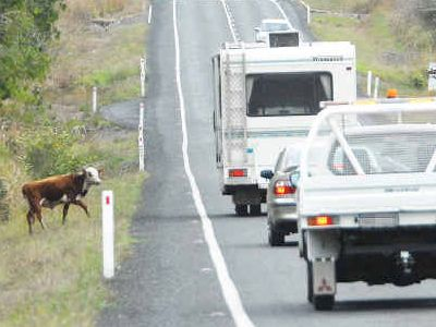 Senior Constable Luke Rowley said cows wandering on the highway could cause death.
