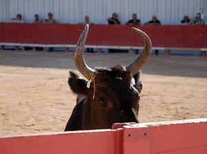 Death of matador shown on live TV