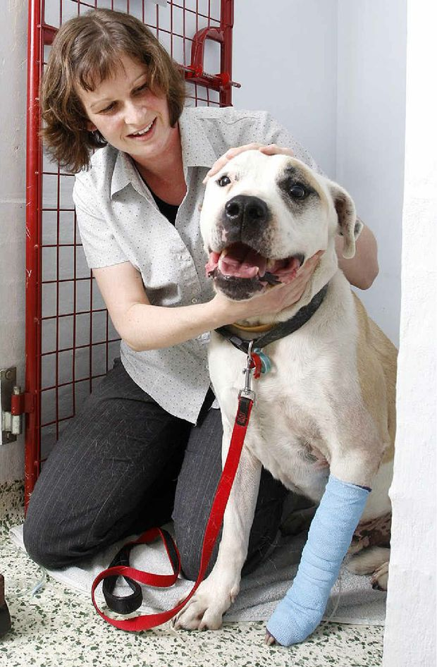 Yamanto Vet nurse Amie Elliot with Buster who was bitten by a king brown snake.