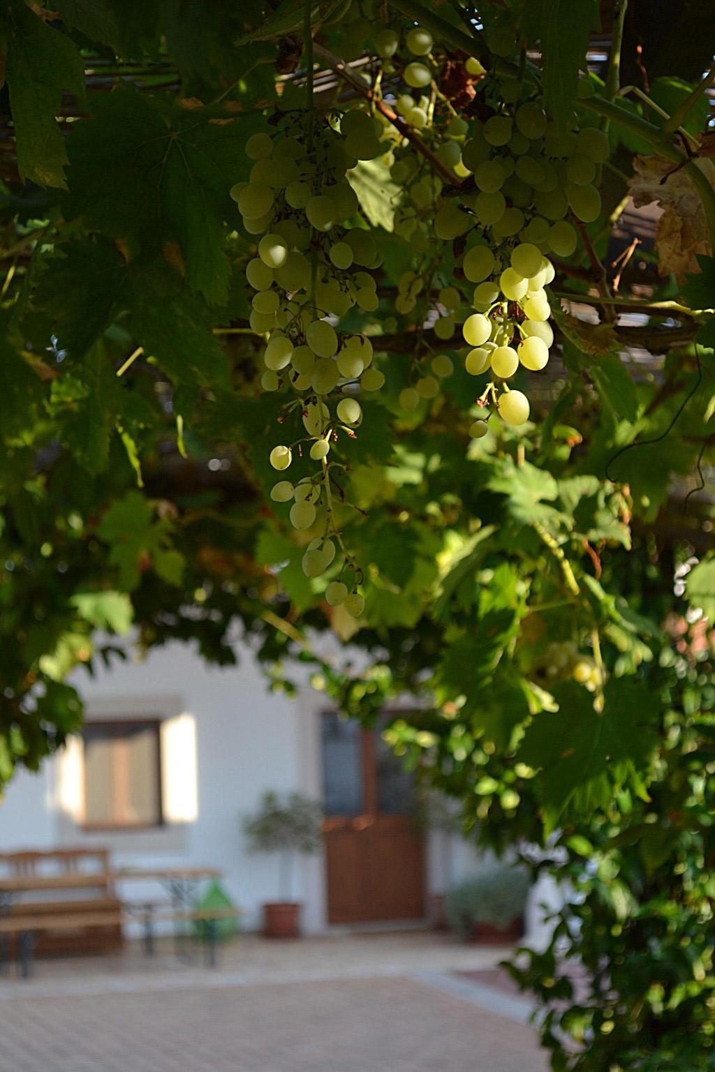 Masseria Cesarina