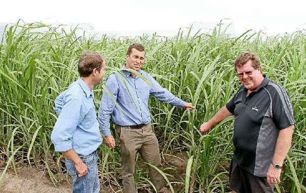 Give committee member Martin Inderbitzin, committee chairman Nathan Ensby and Clarence Cangrowers manager Pat Battersby study cane during one of the expo field trips.