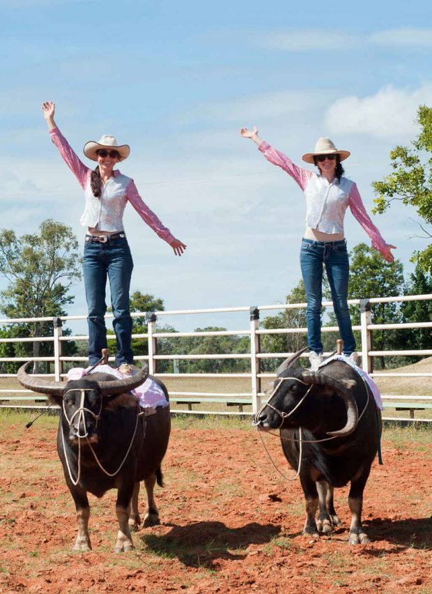 The Buffulo Girls, who show off their skills as they stand tall on their beasts, will be at the Clermont Rodeo tomorrow night.