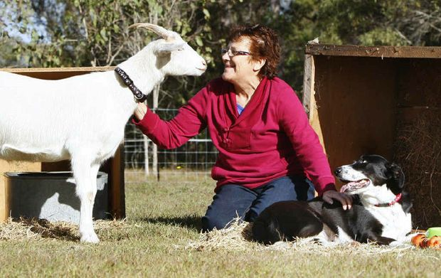 Yvonne Schmaling of Spring Creek with her newly adopted dog Mizzy and goat Bullseye from the RSPCA.