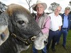 Merlene the bull with owner Max Johnson, Westpac Rescue Helicopter fundraising committee member Revee West and Allan Morgan of Shiralee Produce.