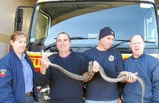 Gympie Fire and Rescue's Brenda Lewis, Grant Nelson, Tony Wildman and Wayne Westlake removed a 1.8m snake from a Gympie resident's toilet on Wednesday evening.