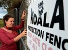 Fire a threat to koala population