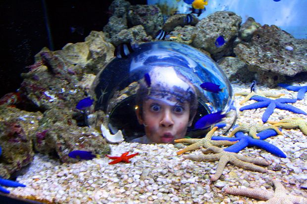 Discover a magical new world under the sea filled with over 50 species of fish in 2.5 million litres of water at UnderWater World's new ocean walk-through.