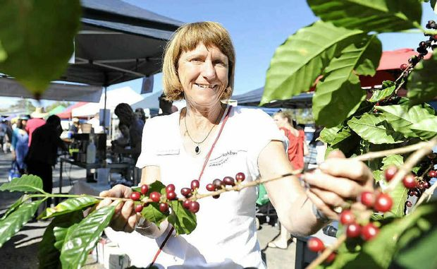 "CHERRY GOOD: North Coast coffee grower Lindsay Ashton shows some bright red coffee cherries (the fruit of the coffee tree) which featured in the ""From Plant to Cup"" coffee making demonstration at the Byron Farmers Market last Thursday."