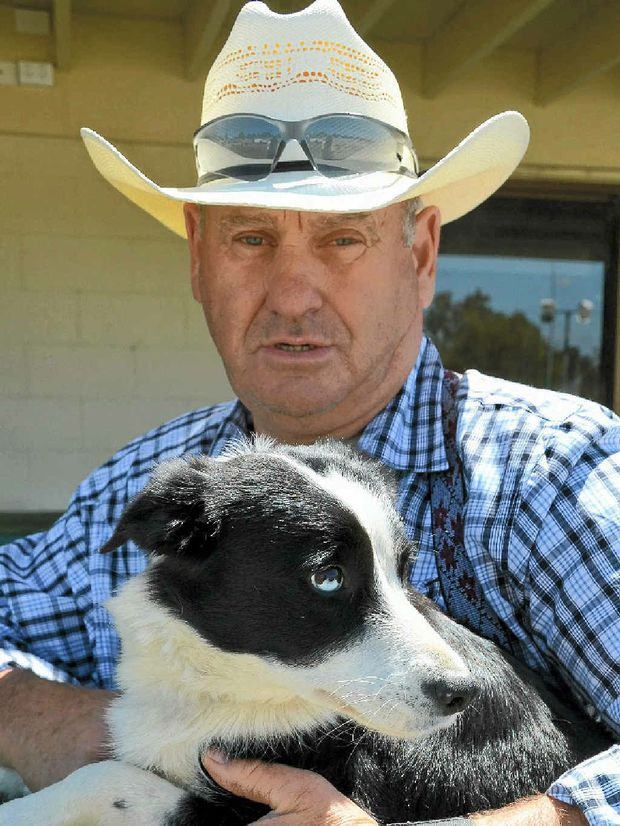 Holly works for Greg Campbell at Warwick Showground for the Australian Supreme Championships.