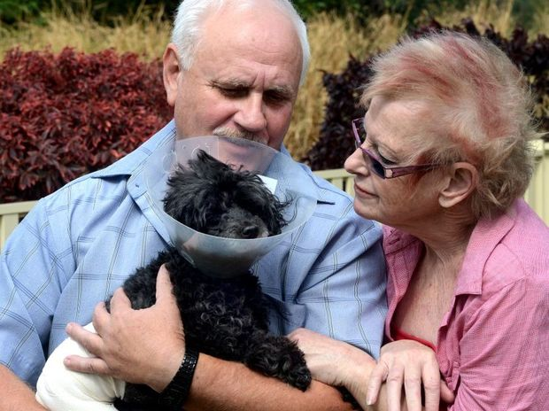 Peter and Susanne Constantas with Muffin the dog. Photo: John Gass / Daily News