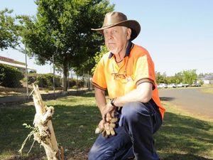 Vandals destroy trees in Drayton