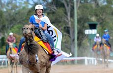 Gympie real estate agent Amy Brown boots her camel home at the Melbourne Cup Day at the Southside Racecourse yesterday.