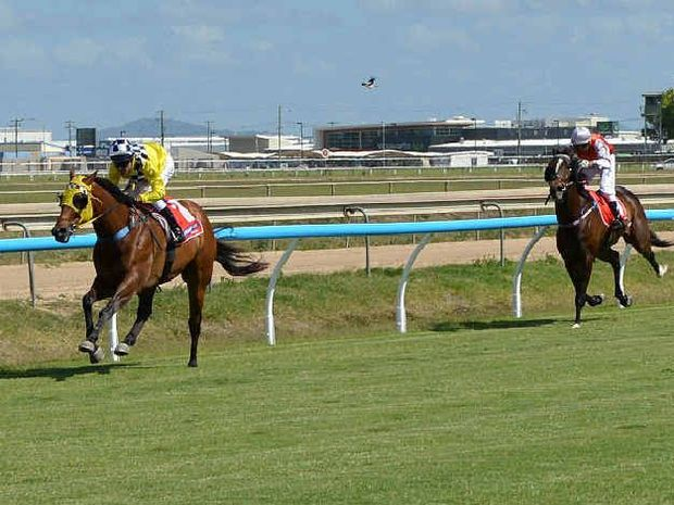 Pacquiao, trained by Darren Symons and ridden by David Simmons, leads home Brother Bob, Fulgora and High Payoff at Ooralea yesterday.